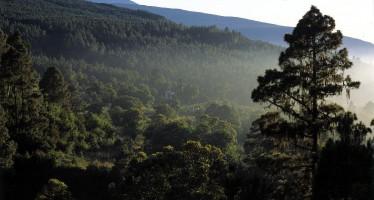 La Orotava: Parque Nacional del Teide, Corpus y mucho más