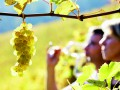 Arranca la vendimia en la Ruta del Vino de Rueda