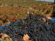 Planes para disfrutar de la Vendimia en la Ruta del Vino de Rioja Alavesa
