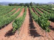 Una experiencia única en Alt Penedès: ruta de vinos y cavas