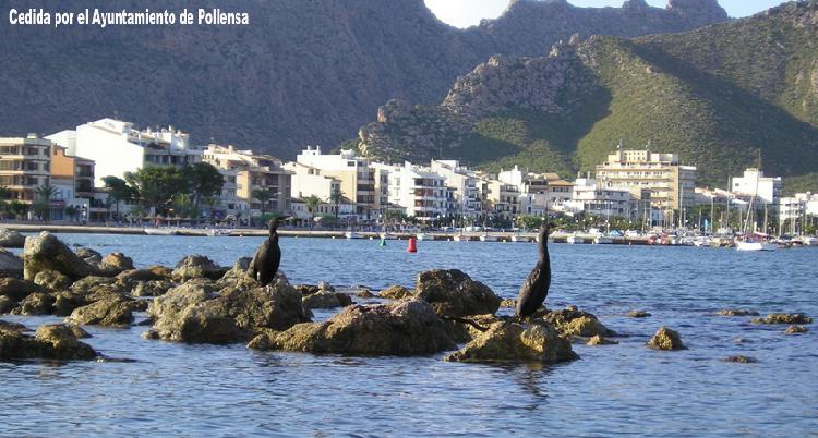 puerto de Pollensa. Turismo Mallorca