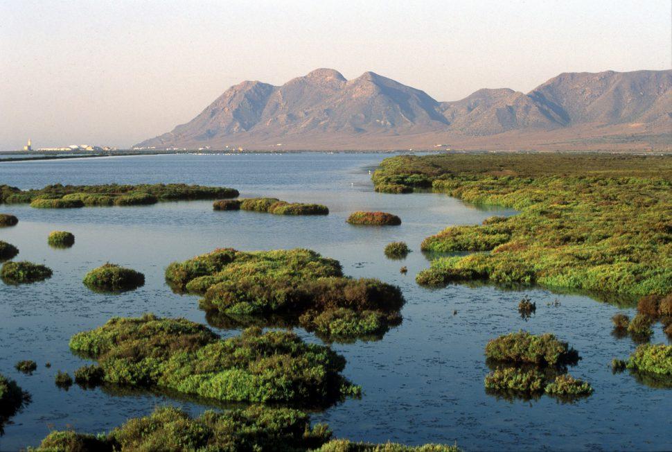 Humedales en las Salinas en el Parque Natural del Cabo de Gata. Turismo Almería
