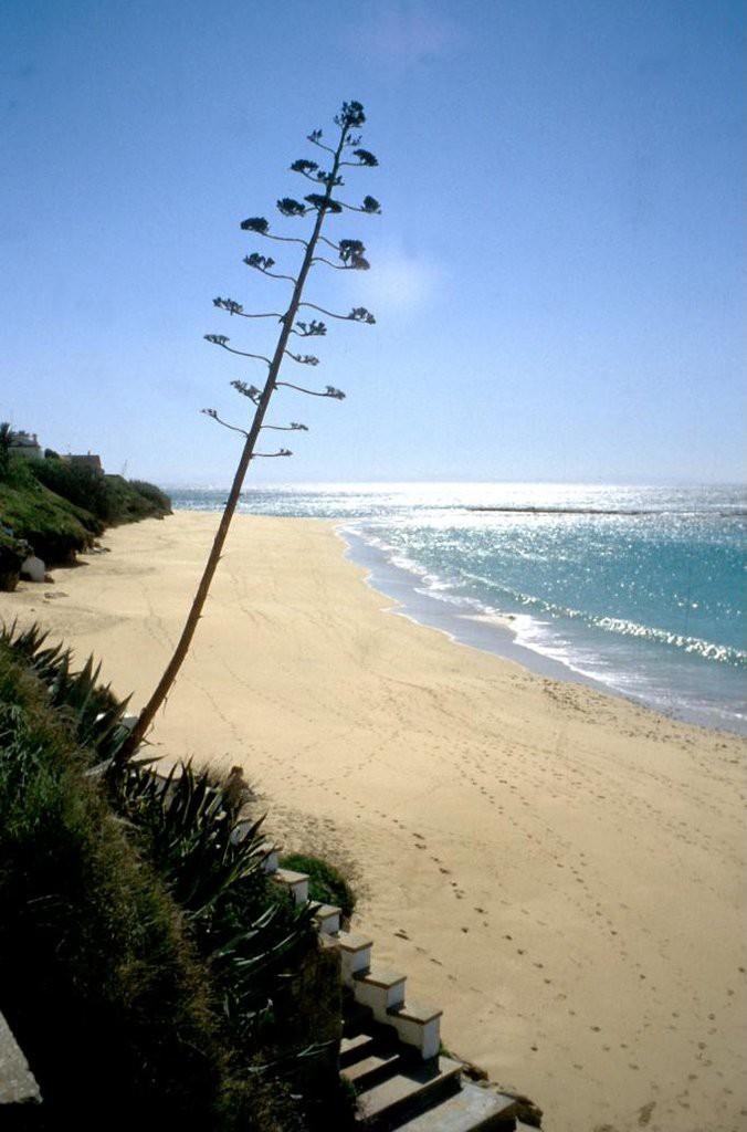 Playa caños de Meca en Vejer de la Frontera. Visitar Cádiz