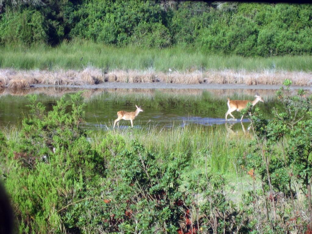 Parque Nacional de Doñana. Visitar Huelva