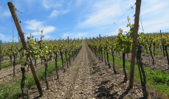 En plena Ruta del Quijote…Cuatro planes para disfrutar de Tomelloso