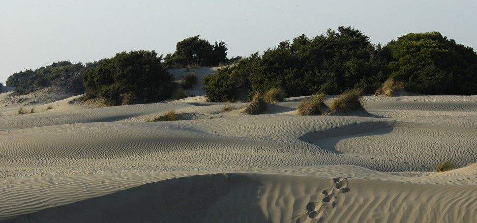 Parque Nacional de Doñana. Huelva. Viajar a España