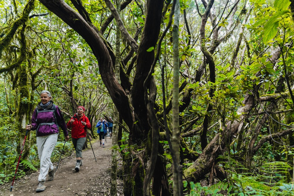 Tenerife Walking Festival - Rutas Verdes