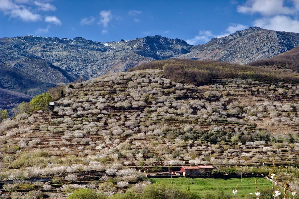 Valle del Jerte. Cerezos en Flor. Cáceres. Viajar a España