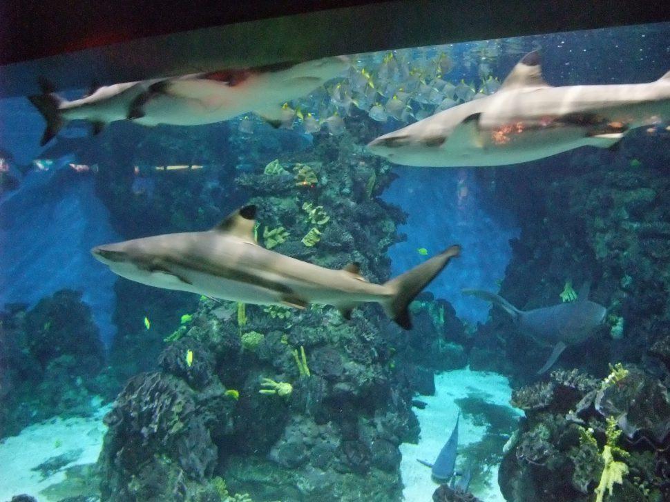 Aquarium - Qué ver en Barcelona