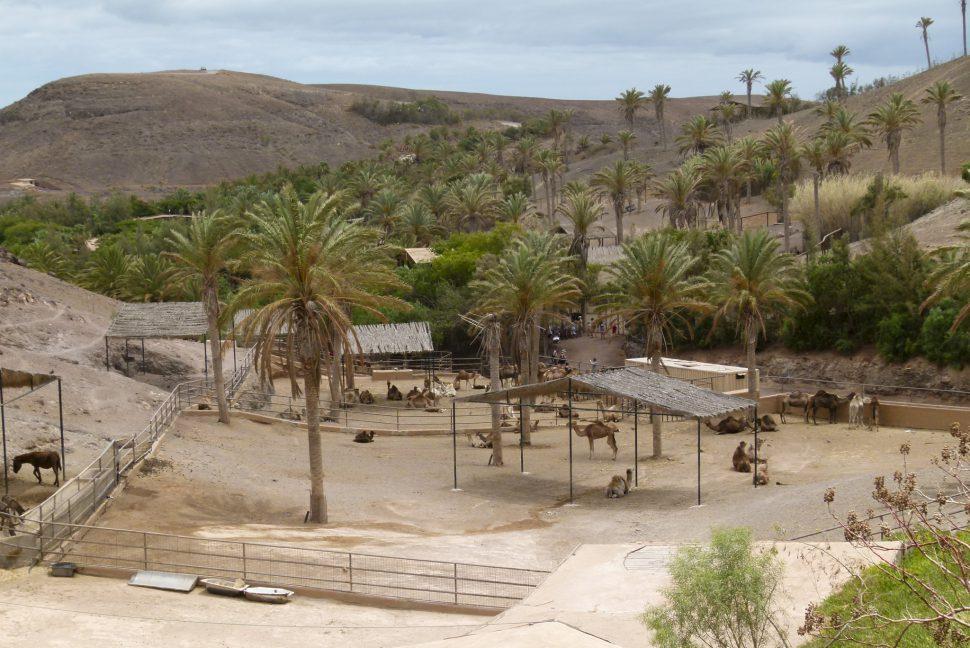 Viajar a Fuerteventura con tu familia