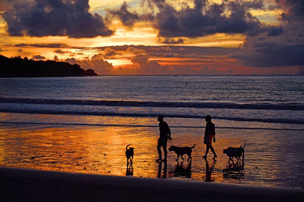 playas para perros - viajar con mascota