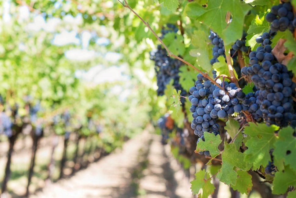 planes turismo rural en La Rioja